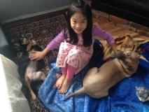 Bruna and her minpin sister Cassie, loving on their best bud Charlotte, who is 6 years old in this photo.