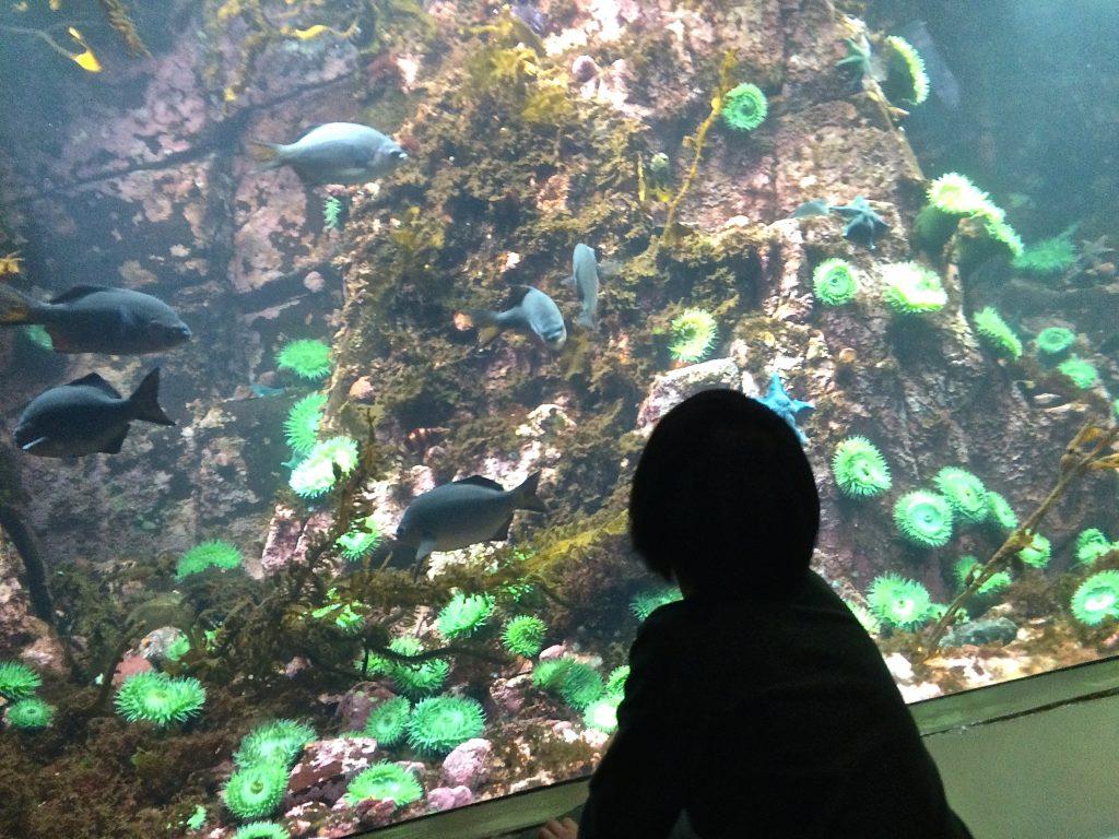Aquatic Adventures At The Vancouver Aquarium Kids New West